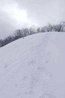 東尾根から見上げた、雪に覆われる京都市北部の雲取北峰山頂