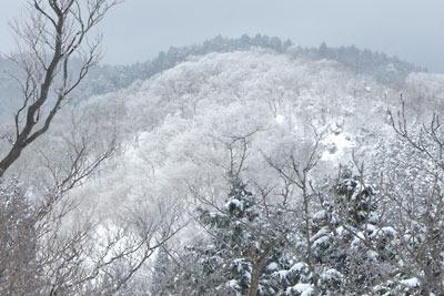 京都・雲取北峰頂部から見た自然林の雪景色
