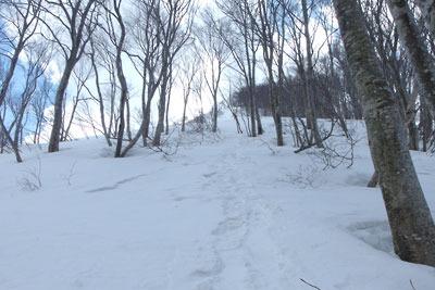 越前甲東部稜線の樹林なかの急斜