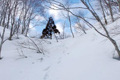 古道らしき道跡も窺えた雪の大日峠