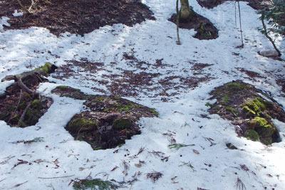 京都・雲取山主峰直下の谷なかにあった炭焼窯跡とみられる石組遺構