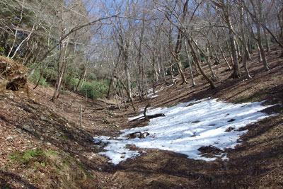 雪解けした、京都・雲取山三ノ谷支流谷奥の主峰直下の急斜面