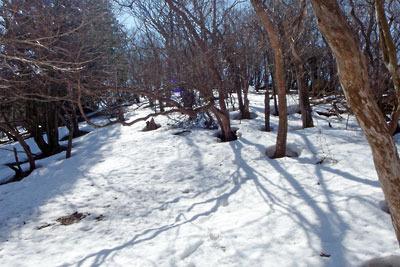 京都・雲取山主峰北斜面の残雪