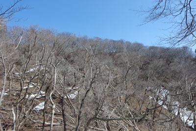南鞍部から見上げた雪解けした京都・雲取北峰