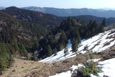 雪解け進む、京都・雲取北峰山頂下のゲレンデ的斜面