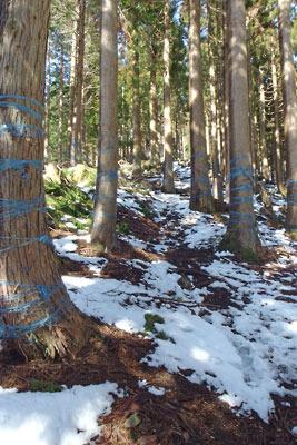 滋賀県比良山脈南部のアラキ峠と権現山を結ぶ急登の植林尾根道