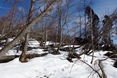 滋賀県比良山脈南端部・権現山近くの倒木の雪原