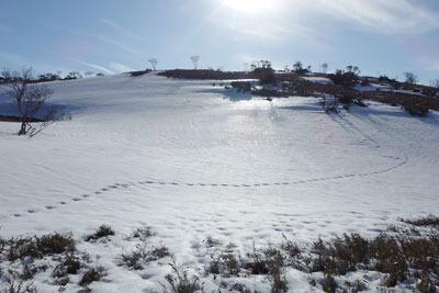 滋賀県西部の比良山脈・小女郎ヶ池付近の雪原