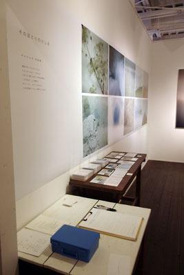 京都市街東部のホホホ座浄土寺店のギャラリーで開かれた、サカネユキ「そのほとりのけしき」展導入部
