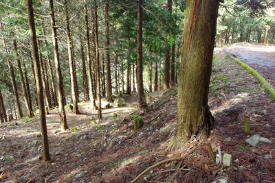 滋賀県比良山中の旧花折峠道下部に並走する更に古い旧道路盤