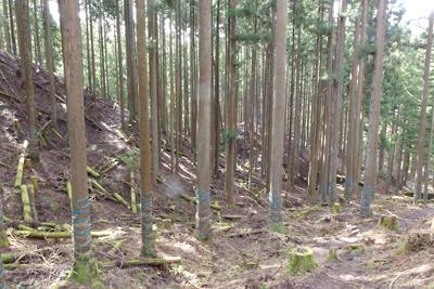 滋賀県比良山中の平集落・アラキ峠間の登山道から見た3種の花折古道