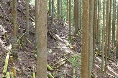 滋賀県比良山中の旧花折峠道上に残る細い道跡
