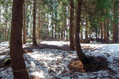 残雪ある植林に囲まれた滋賀県西北・赤岩山山頂