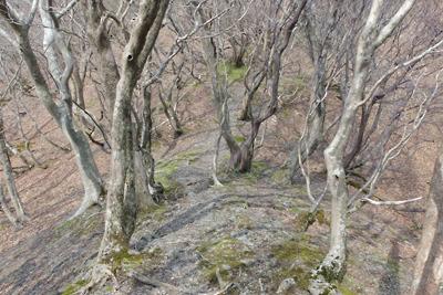 標高約640mの滋賀県西北・武奈ヶ嶽北の縦走路鞍部