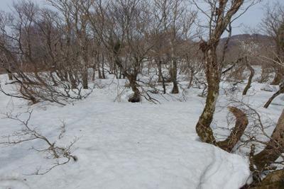 滋賀県西北・三重嶽西手前の残雪ある広尾根