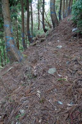 滋賀県西北・野坂山地のワサ谷上部に続くつづらの古車道