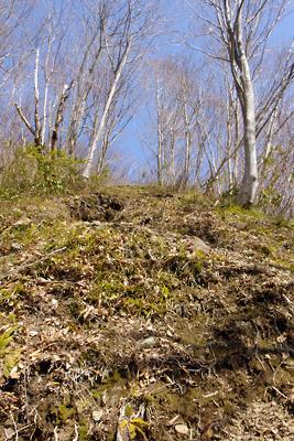 能郷白山の登山口から続く見上げるばかりの急登道