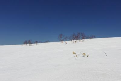 まだ冬山風情の能郷白山横の前山の雪原
