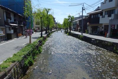 京都白川の柳の新緑と輝く水面
