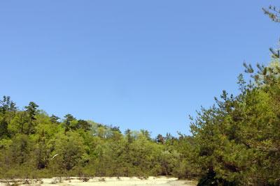 滋賀県湖南アルプス太神山中の新緑
