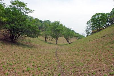 皆子山山上の高地草原