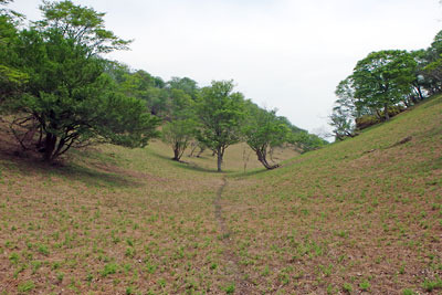 京都北山(丹波高地)にある京都府最高峰「皆子山」山上の草原