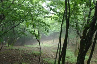 鞍掛峠・鈴北岳間の尾根道の下部から吹き上げてくる霧