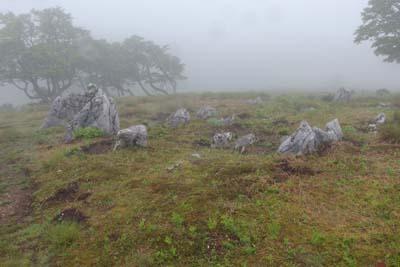 御池岳山塊山上の石灰岩