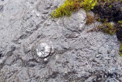 御池岳の石灰岩中の化石