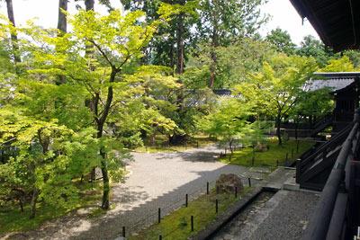 楓の青葉が見た目に涼しい、京都・真如堂本堂北の庭