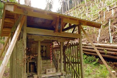 倒木被害の整理が進む、京都・芹生集落奥の「勢龍天満宮(せりょうてんまんぐう)」裏の山林