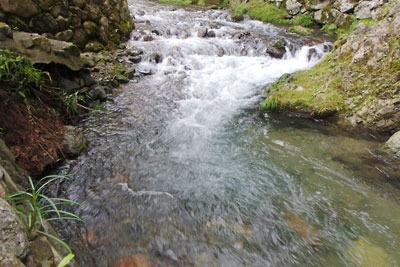 先日の雨で増水するもあくまでも清冽な、芹生を貫く灰屋川