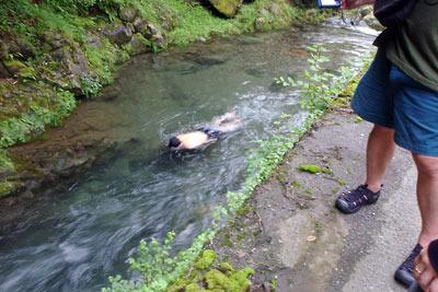冷たくて手足を浸けるのも憚られる、京都・芹生の灰屋川で泳ぐ友人