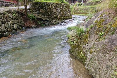 先日の雨のため普段の数倍の水量で涼しさを供する、京都市街北部・芹生集落を流れる灰屋川