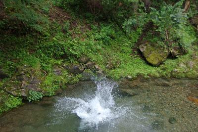 京都市街北部・芹生集落を流れる灰屋川に朝から飛び込み泳ぐ避暑泊同行者