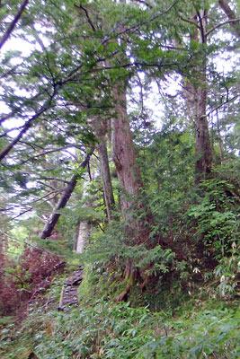 白出沢の対岸から始まる、石が敷かれたような細道が山腹に延々と続く、槍ヶ岳登山道