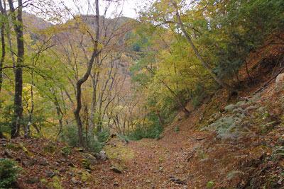 滋賀県西部・比良山麓に残る幕末廃道沿いの天然林紅葉と黄紅葉が盛り始めた背後の丹波高地