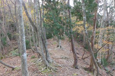 佐々里峠から南へと続く尾根筋と紅葉ある天然林