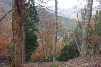 佐々里峠南の尾根筋に現れた天然林紅葉と、色づく奥丹波の山々
