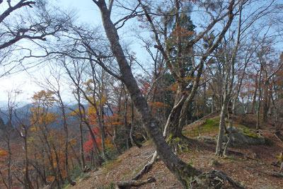 ダンノ峠から品谷山に続く天然林稜線