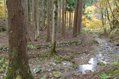 品谷峠南のスモモ谷を下った先に現れた廃村八丁の中心地(右奥)と宅地(?)(左)の石積み