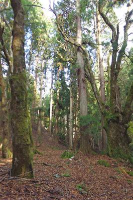 廃村八丁から四郎五郎峠に続く支流谷の天然林と古道跡