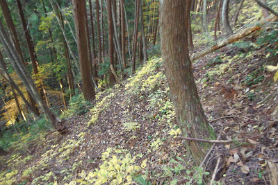 四郎五郎峠へと続く急斜のつづら細道