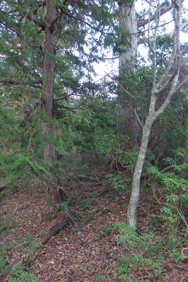 四郎五郎峠から続く尾根筋上部に現れた藪