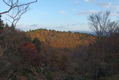 四郎五郎峠北の稜線から見た、西日に浮かぶ八丁奥の紅葉