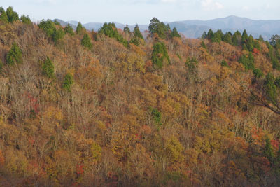 西日に染まる廃村八丁奥の天然林紅葉と、背後に聳える比良山脈の最高峰・武奈ヶ岳(1214m)