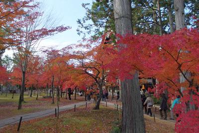 真如堂本堂横(南)の楓紅葉の林