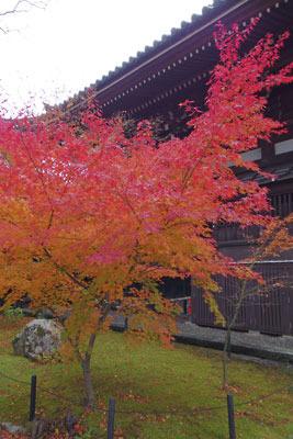 京都・真如堂本堂脇の鮮やかな紅葉