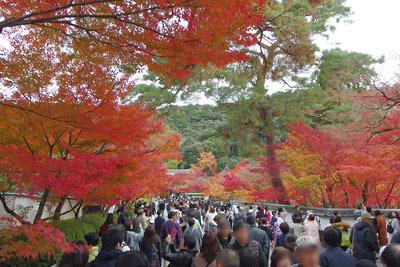 永観堂総門(表門)内の人出と鮮やかな紅黄葉