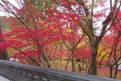 真如堂庭園内の紅黄葉
